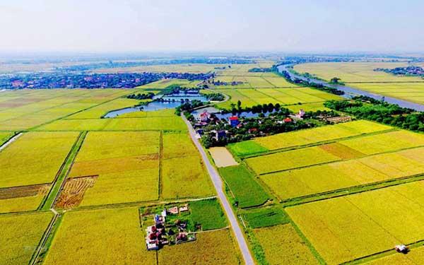 Thực trạng mua đất nông nghiệp hiện nay
