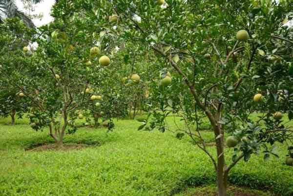 Hướng dẫn thủ tục chuyển đổi đất trồng cây lâu năm sang đất thổ cư