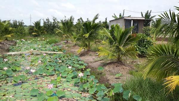 Hướng dẫn thủ tục chuyển từ đất vườn sang đất ở