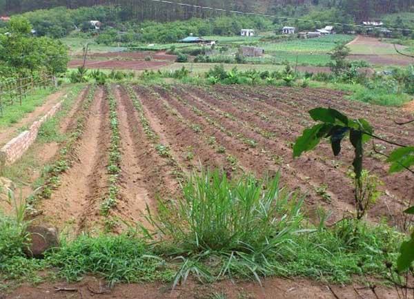 Chuyển đất trồng cây hằng năm sang đất nông nghiệp khác