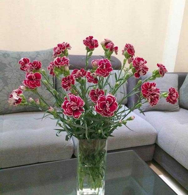 Bình hoa cẩm chướng đa sắc màu