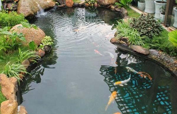 Thiết kế sân vườn sân thượng có bể cá